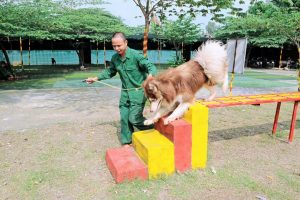 Trung tâm huấn luyện chó uy tín tốt nhất tại Tphcm