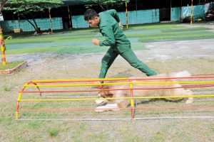 Hướng dẫn cách huấn luyện chó đơn giản ngay tại nhà
